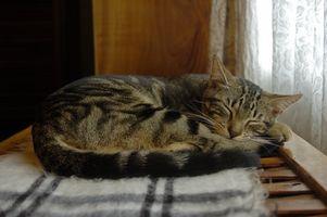 ¿Cómo puedo dejar mi gato de despertarme?