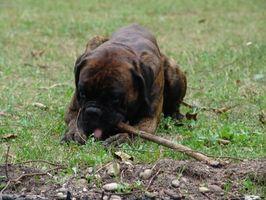 Cómo iniciar un banco de alimentos para perros