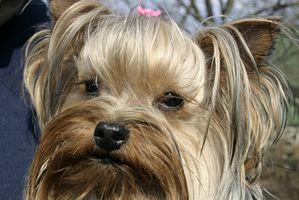 Subluxación del hombro en los perros