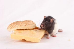 Colecalciferol en veneno para ratas
