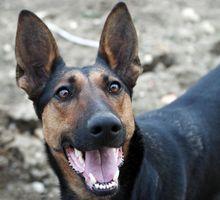 Subluxación en los perros