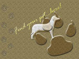 Cómo adoptar una mascota en el SPCA
