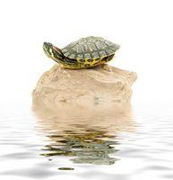 Cómo hacer zonas de calentamiento para tanques de tortuga