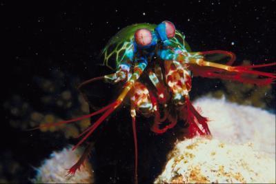 Características bióticas de Marina bentónica