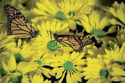 Hechos sobre los diferentes tipos de insectos