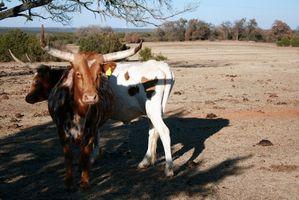Estilos de hierro marca Texas