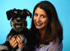 Cómo preparar a un perro Schnauzer de miniatura pelo fino