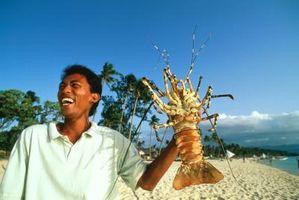 ¿Qué sucede con los alimentos digeridos en un cangrejo de río?