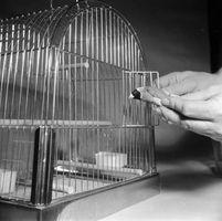 Cómo elegir la jaula de un Pinzón