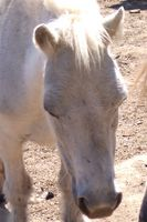 Consejos sobre entrenamiento caballos de bebé