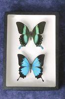 Ideas de fondo para una colección de insectos