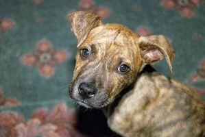 Lista de perros peligrosos requieren seguros