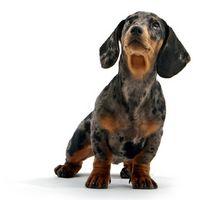 Cómo enseñar a un perro salchicha para dejar de ladrar