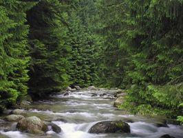 Eutrofización en los ecosistemas de la secuencia de movimiento rápido
