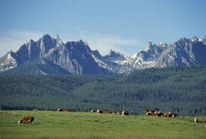 Los efectos negativos de la ganadería en especies en peligro de extinción