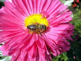 Alternativas al agua con azúcar para la alimentación de las abejas