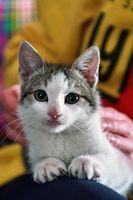 Las mejores medicinas de pulgas para gatos