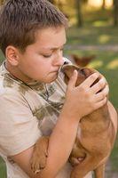 Anquilostomas en perros y seres humanos