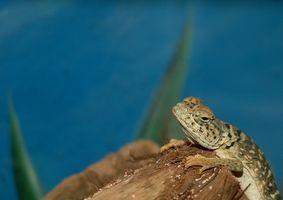 Cómo construir reptiles terrarios para Geckos