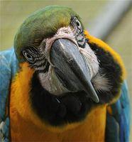 Aves en peligro de extinción y plantas