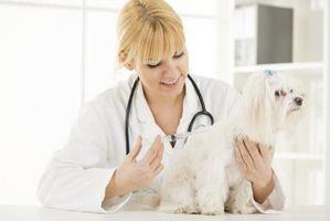 ¿Qué es el Torbutrol drogas en perros?