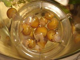 Cómo remojar las plantas de acuario para los caracoles