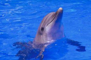 Diferencia entre los delfines macho y hembra