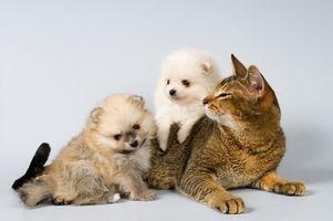 Signos y síntomas de la ingestión de lejía en las mascotas