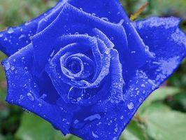 ¿Qué una rosa azul significan?