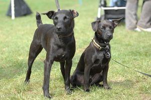 Probióticos y enzimas naturales para perros