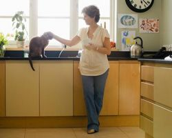 Cómo traer un nuevo gato en su casa y que ha perdido un dueño