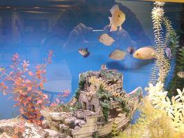 Cómo elevar el pH en los tanques de pescados