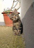¿Es el aglomerante gato basura causa problemas respiratorios?