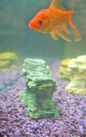 A partir de un filtro de tanque de peces