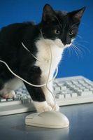 ¿Cuándo los gatos crecen fuera de la etapa loco hiperactiva?