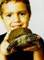 ¿Lo que las mascotas pueden ser en el mismo tanque como una tortuga?