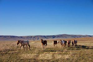 Cómo rescatar un Mustang salvaje