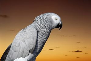 Cómo hacer un juguete del pájaro de periódico