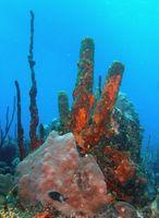 Cómo ayudar a salvar los arrecifes de Coral