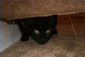 Causas de estreñimiento gato