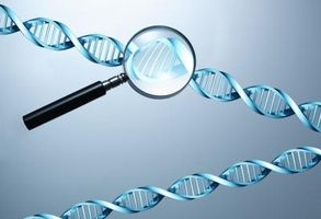 Herramientas utilizadas en el análisis de la DNA