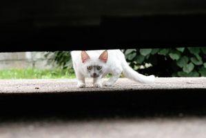 Cómo deshacerse de los gatos callejeros debajo de una casa