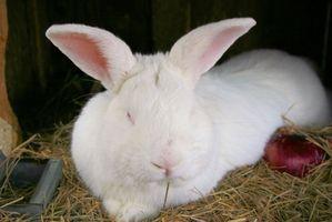 Cómo criar conejos de carne en Alaska