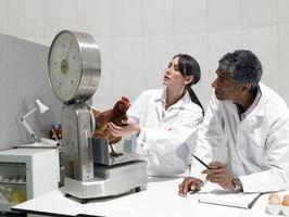 Comparación de métodos de investigación cualitativos y cuantitativos