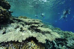 Clasificación de ecosistemas marinos