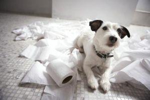 Remedio homeopático para la incontinencia urinaria canina
