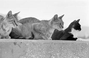 Cómo construir un recinto pequeño gato para balcones