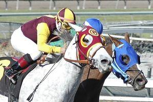 Cómo entrenar un caballo que puede correr en el Derby de Kentucky