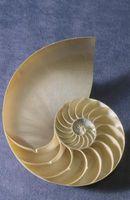 Cómo integrar una espiral alrededor de una circunferencia fija