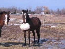 Cómo a Clicker entrenar un caballo para Fetch